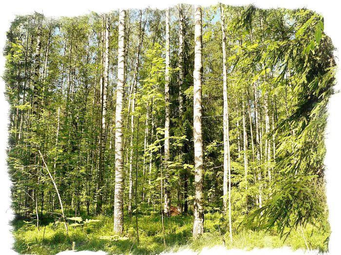 Народные приметы если гроза на голый лес пошла