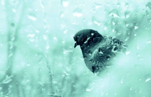 Примета: птица ударилась в окно