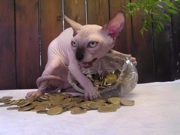 Как вызвать египетского кота днем и исполнить желание