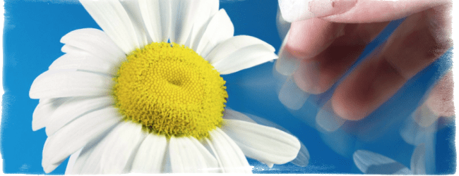 Гадание на ромашке, цветах