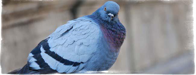 Птица залетела на балкон примета