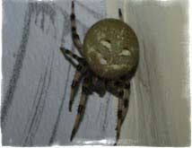 примета паук в доме
