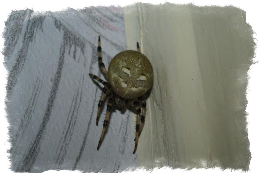 Что делать с пауками в квартире