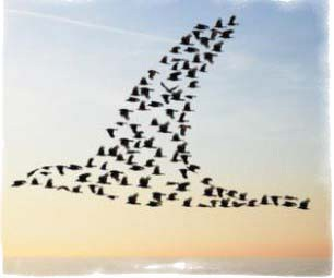 Приметы про птиц