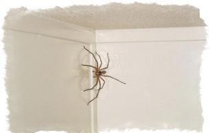 приметы паук в ванной