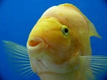 Рыбы гадания Ленорман