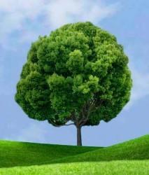 дерево гадания