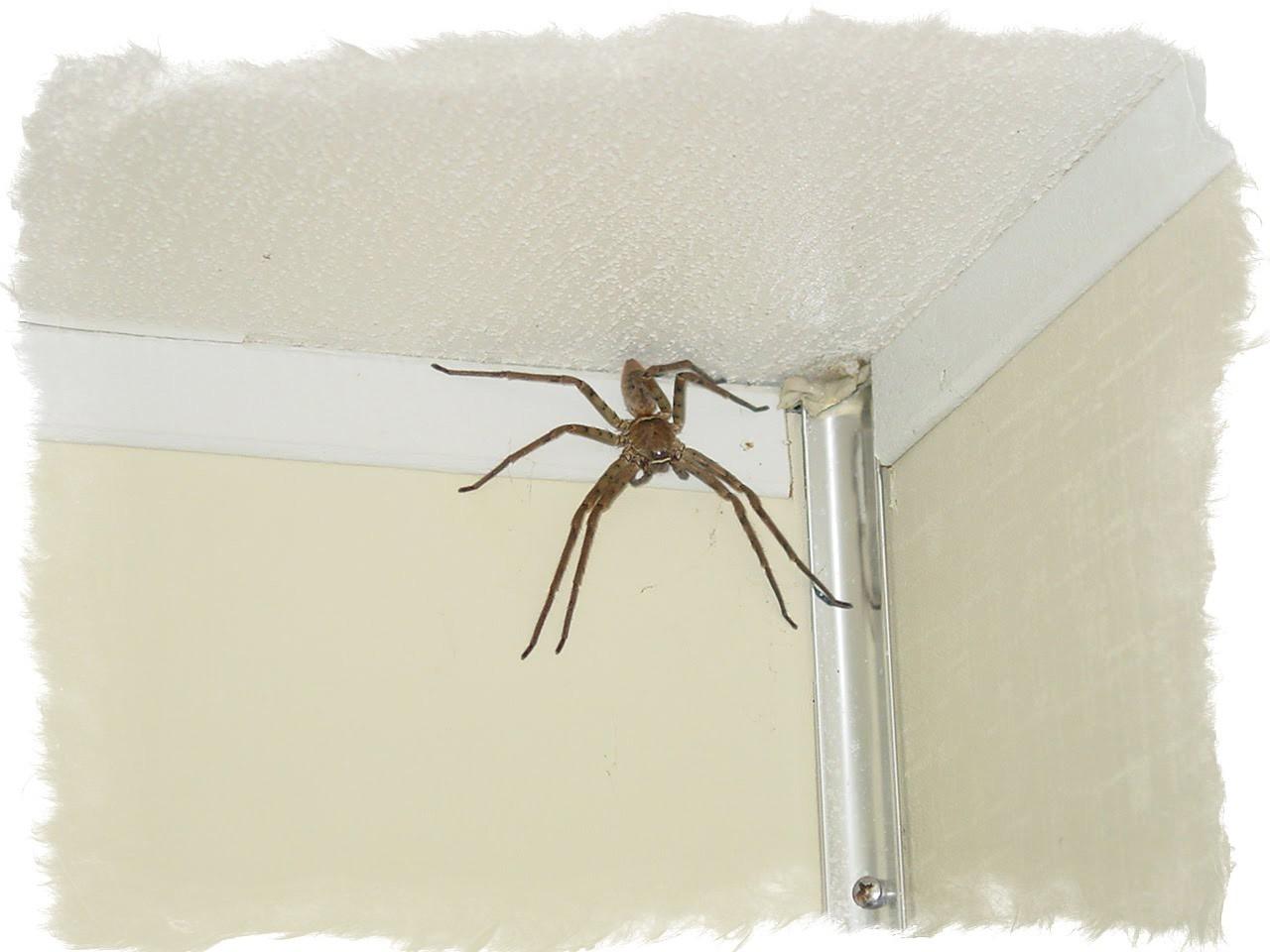 К чему увидеть паука утром, днем и в другое время суток, на работе и в машине и прочее