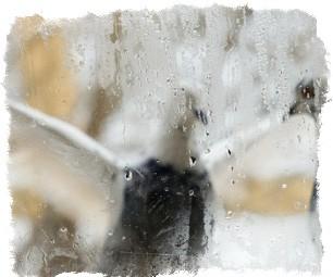 примета птица бьется в окно