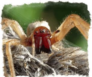 приметы увидеть паука