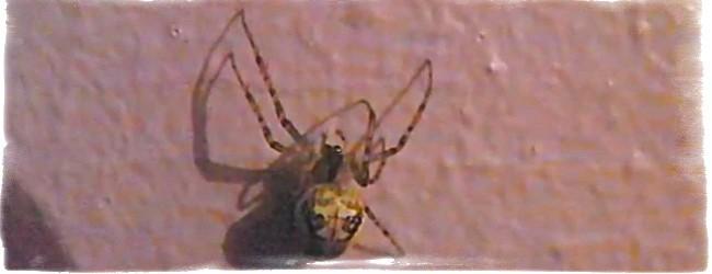 паук ползет вверх по стене примета