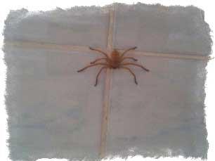 приметы паук спустился с потолка