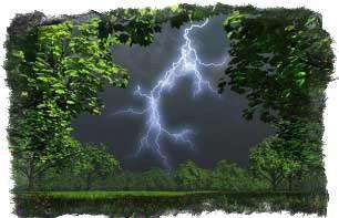 приметы если гроза на голый лес