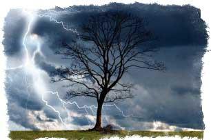 гроза на голое дерево приметы