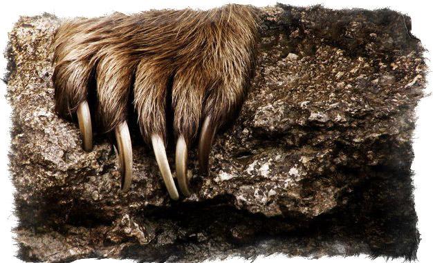 печать велеса медвежья лапа