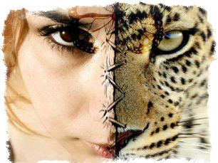 реинкарнация животных