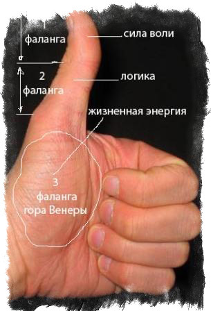 анализ рук хиромантия