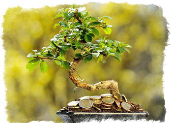 денежное дерево для привлечения денег
