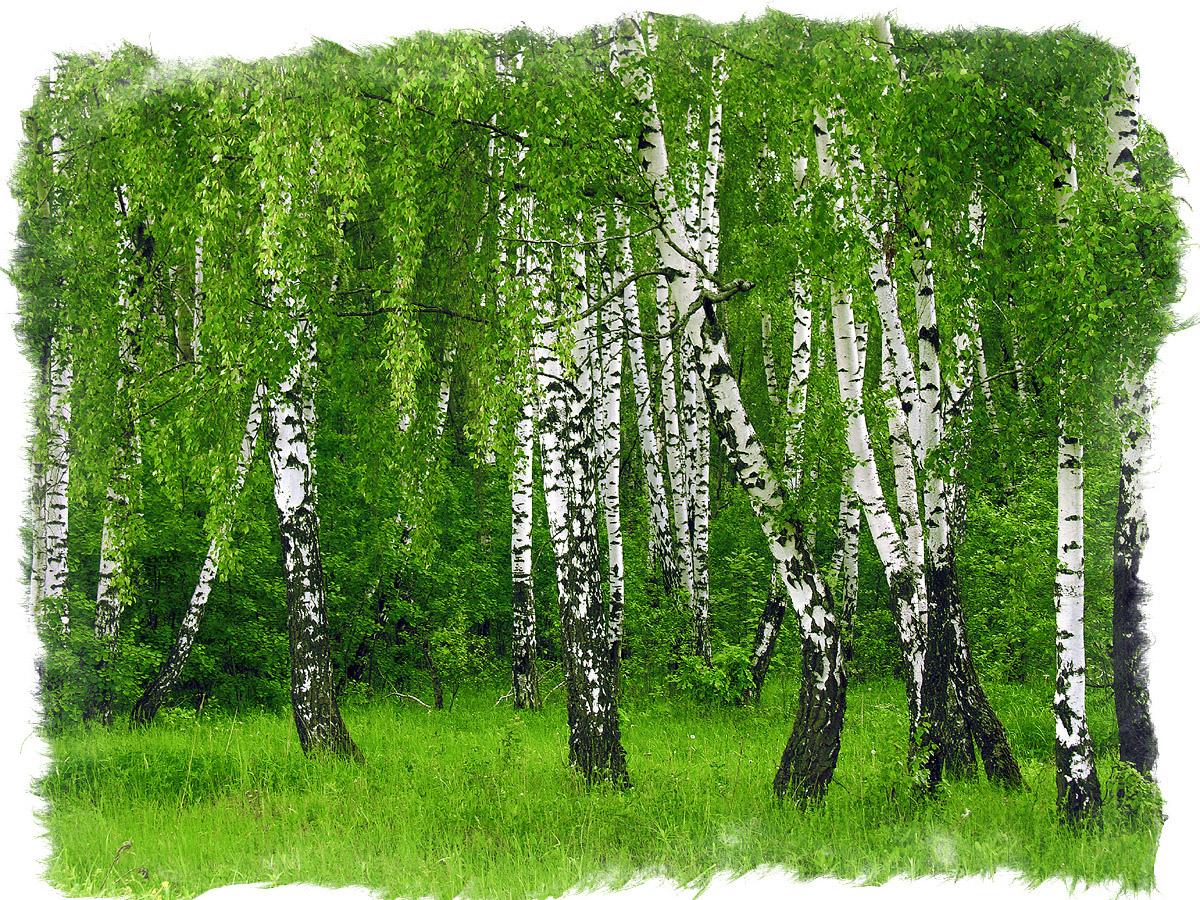 магия деревьев и растений