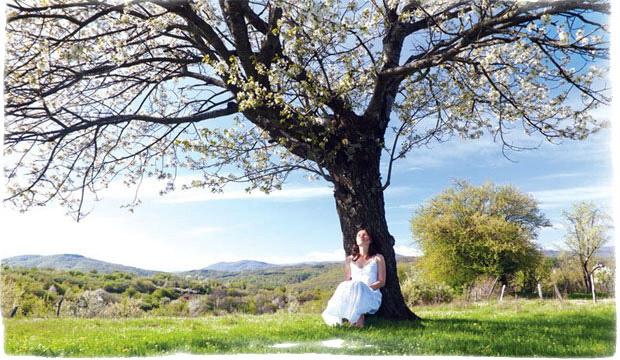 Живое дерево – лечебные свойства, рецепты
