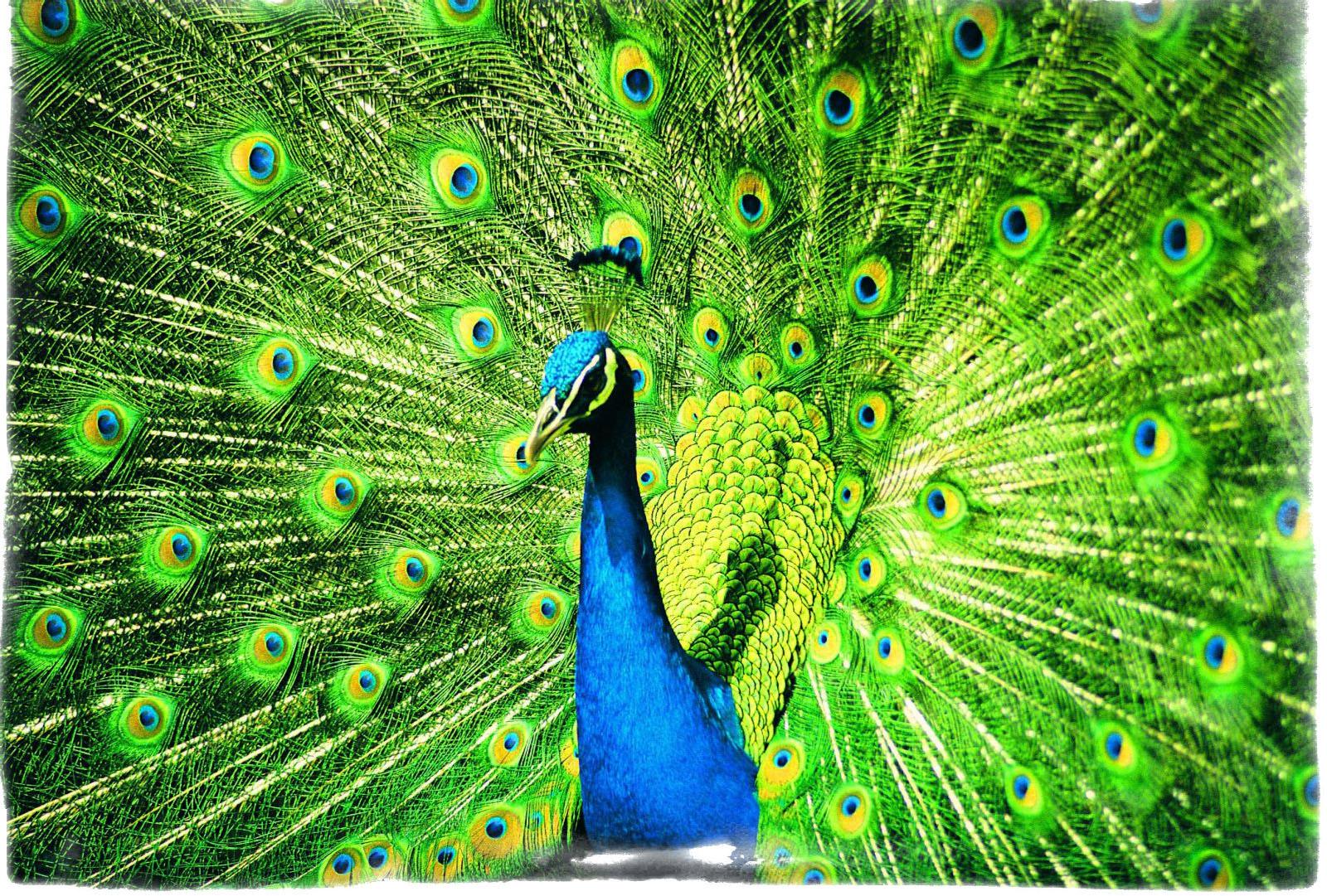 Синяя аура — значение небесных оттенков на тонком теле человека