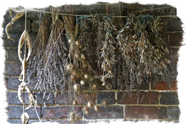 растения обереги