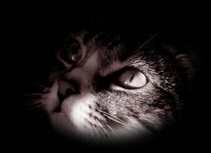 мистические истории про кошек