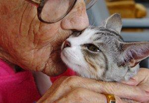 кошки мистические существа