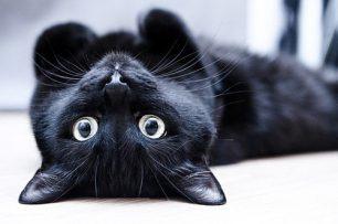 черный кот энергетика