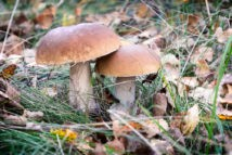 Увидеть во сне грибы
