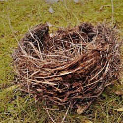 Птичье гнездо для приворота